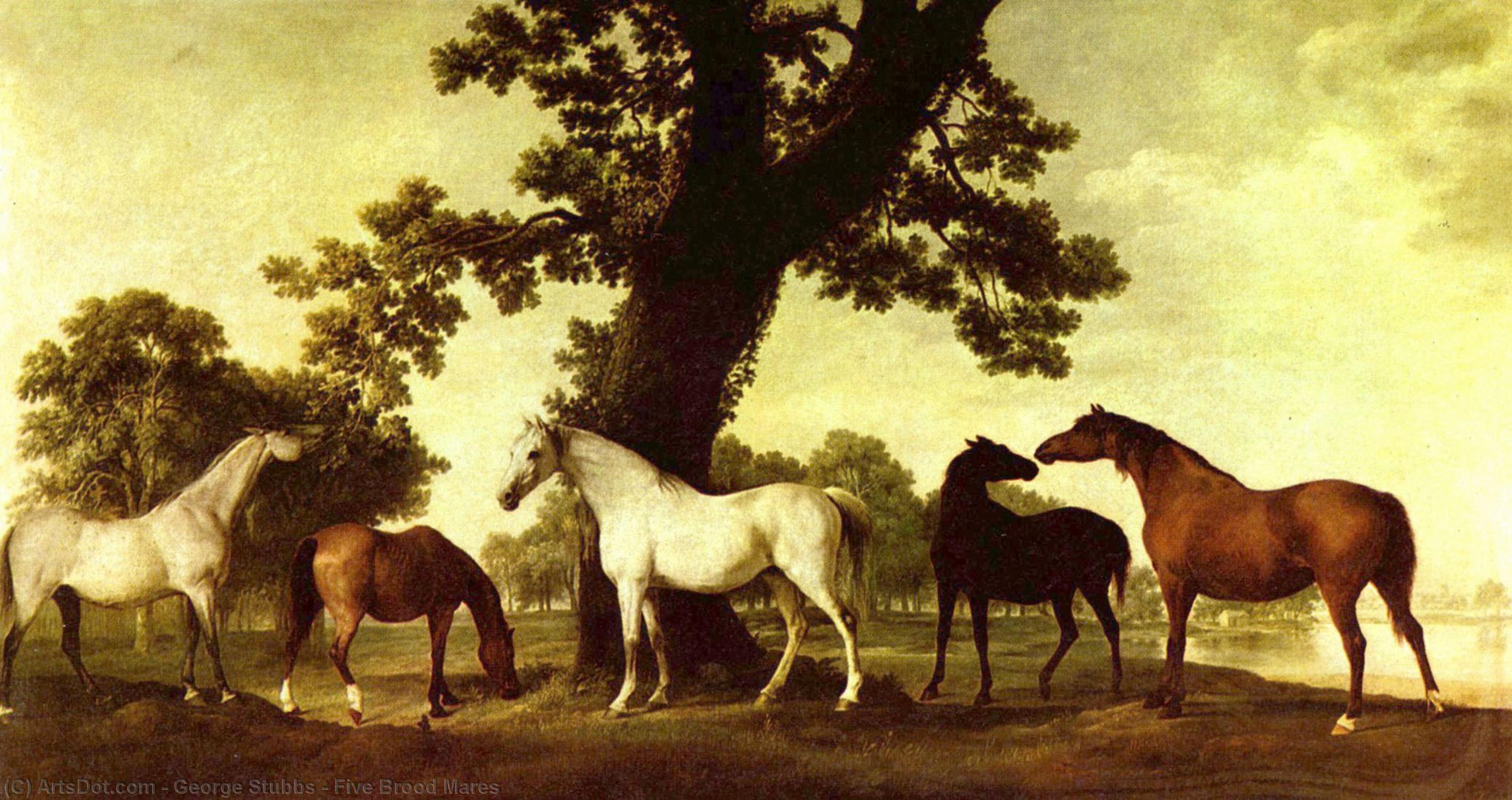 五育雏母马 通过 George Stubbs (1724-1806, United Kingdom) | 幀畫冊專輯 | ArtsDot.com