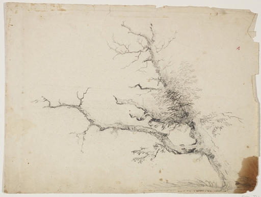 tree6, 插图 通过 Thomas Cole (1801-1848, United Kingdom)