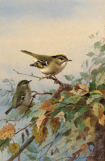 Goldcrests, 水彩 通过 Archibald Thorburn (1860-1935, United Kingdom)