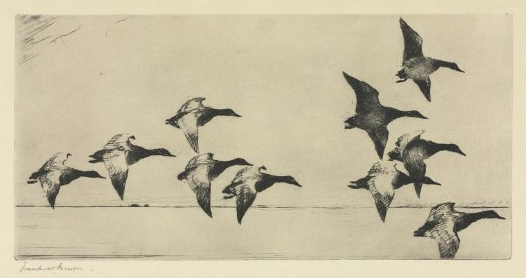 Canvasbacks, 蚀刻版画 通过 Frank Weston Benson (1862-1951, United States)