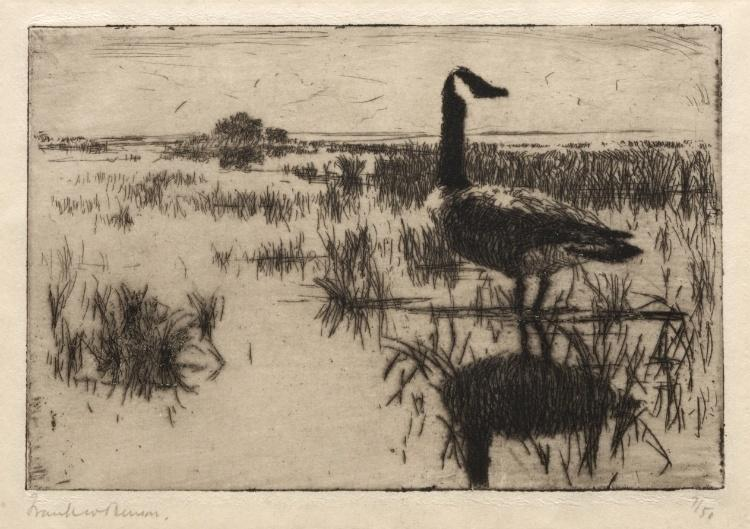 孤鹅, 蚀刻版画 通过 Frank Weston Benson (1862-1951, United States)
