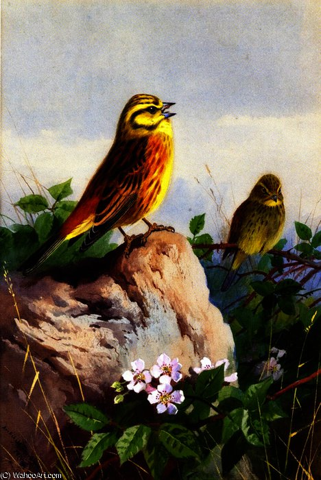 一岗双Yellowhammers的, 水彩 通过 Archibald Thorburn (1860-1935, United Kingdom)
