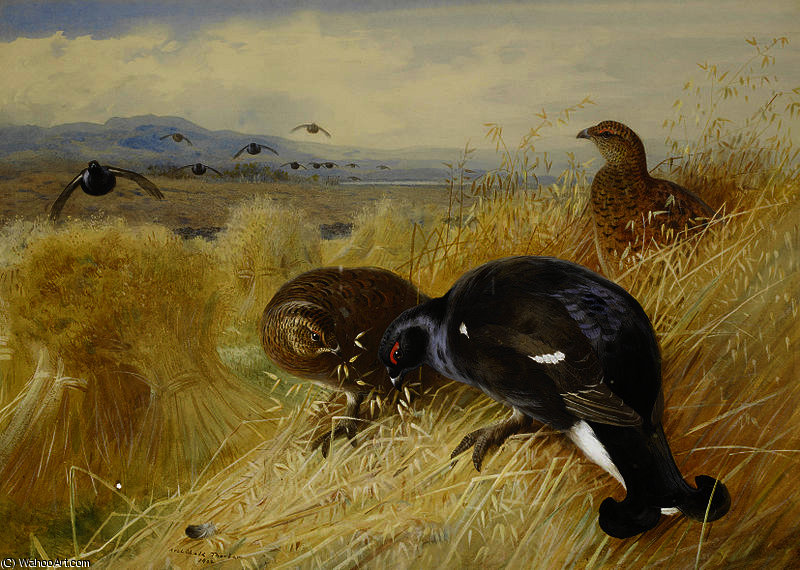 在stooks - Blackgame 通过 Archibald Thorburn (1860-1935, United Kingdom)