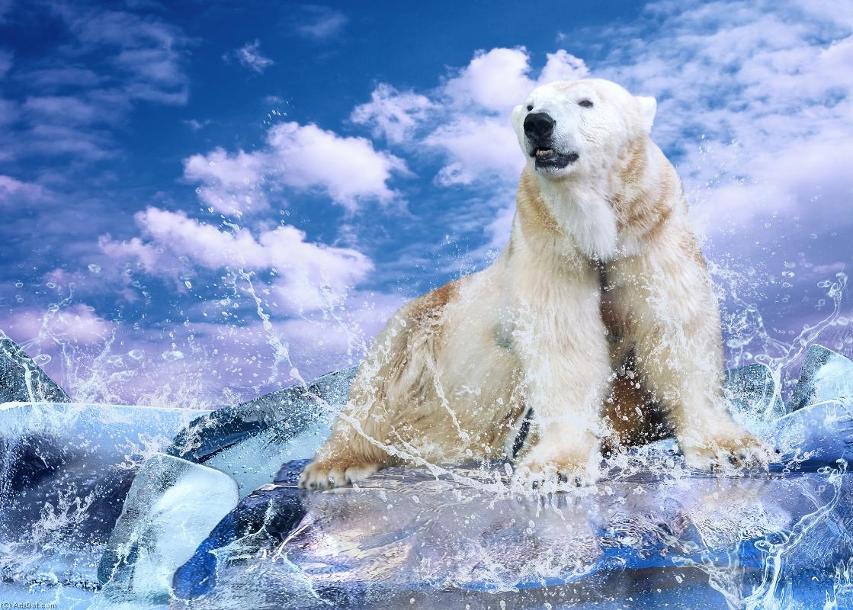 动物-北极熊(ac6mvg)黄喉貂vs猴子图片
